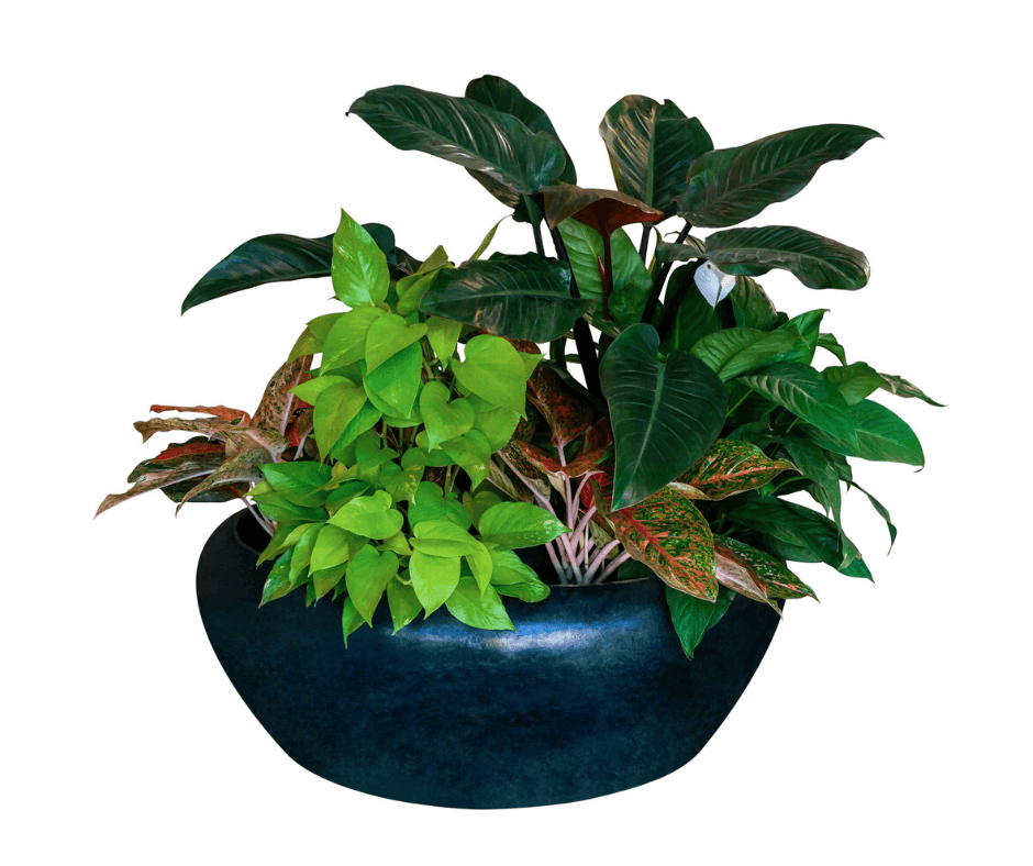 Indoor planter with peace lilly