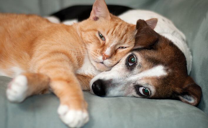 Cat and dog snuggle