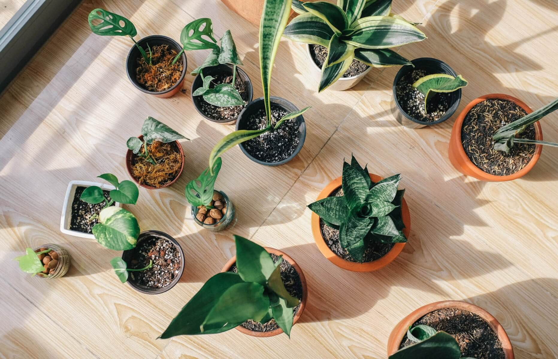 Fetilize Houseplants
