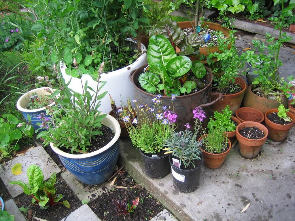 Photo of container garden on a patio
