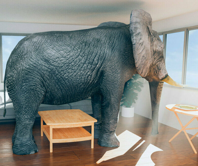 Elephant standing in furnished living room.